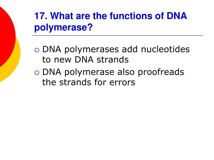 17. What are the functions of DNA polymerase?