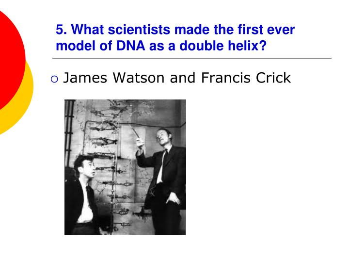 5. What scientists made the first ever model of DNA as a double helix?