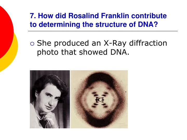 7. How did Rosalind Franklin contribute to determining the structure of DNA?