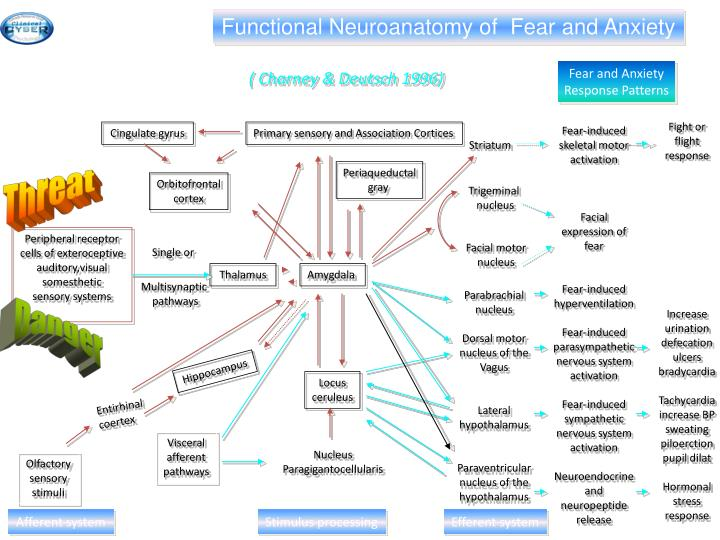 Functional Neuroanatomy of