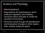 anatomy and physiology13