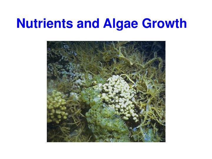 Nutrients and Algae Growth
