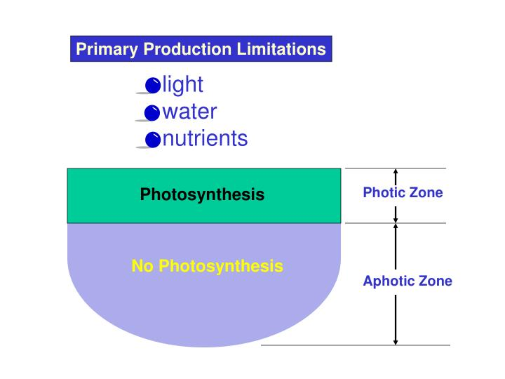 Primary Production Limitations