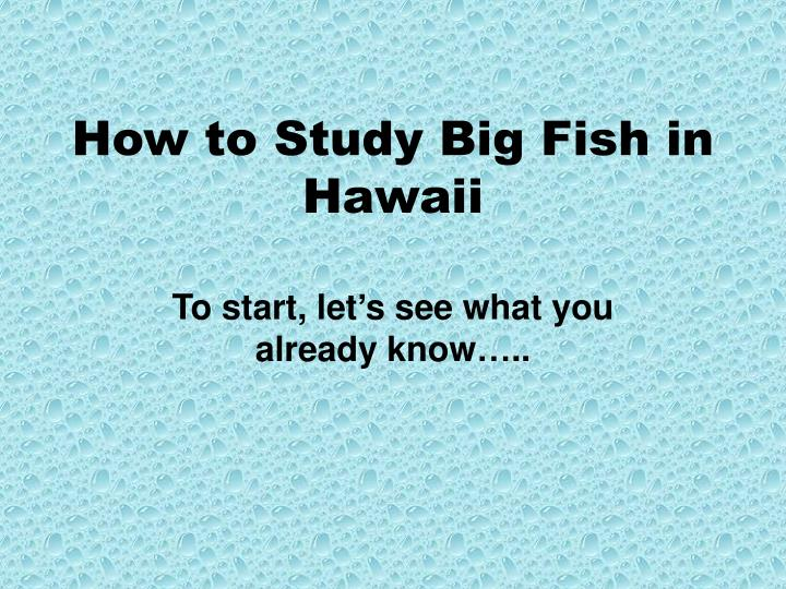 How to study big fish in hawaii