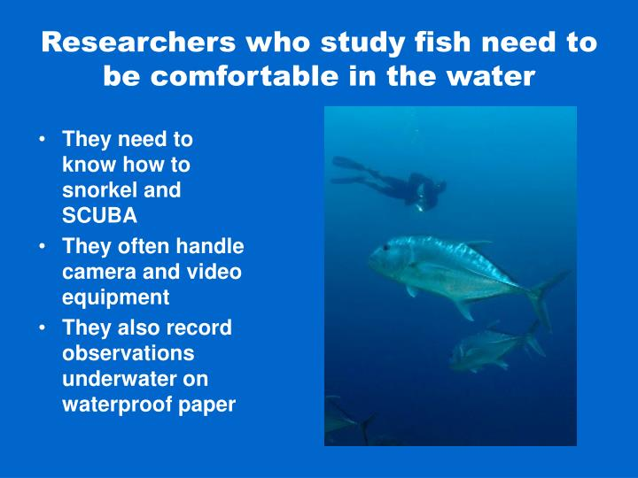 Researchers who study fish need to be comfortable in the water