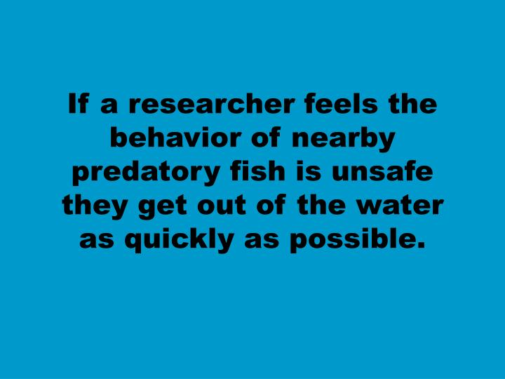 If a researcher feels the behavior of nearby predatory fish is unsafe they get out of the water as quickly as possible.