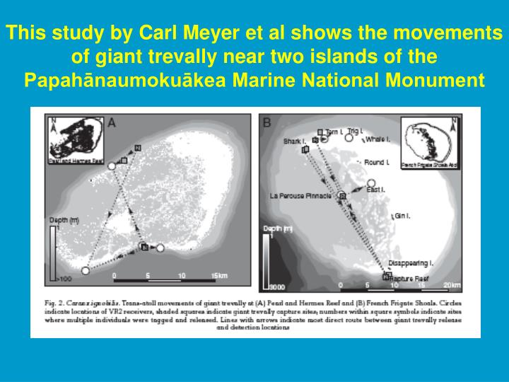 This study by Carl Meyer et al shows the movements of giant trevally near two islands of the Papahānaumokuākea Marine National Monument