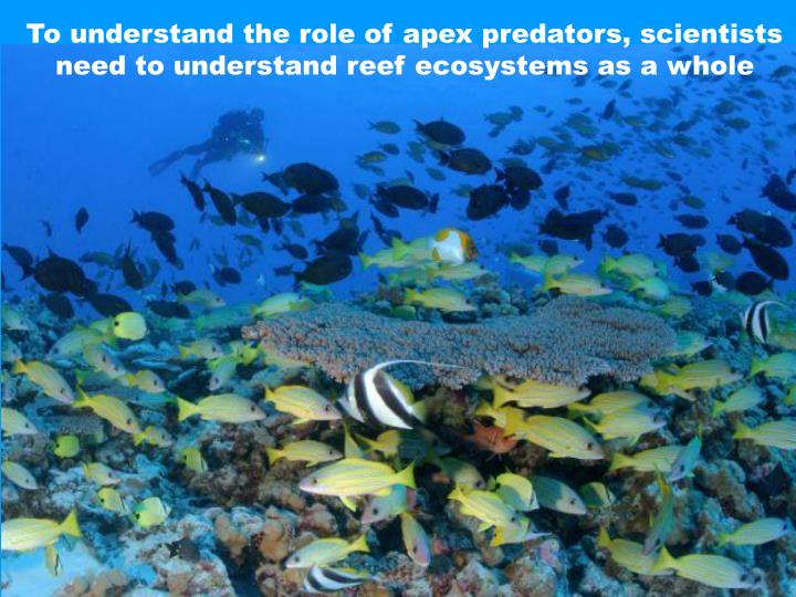To understand the role of apex predators, scientists need to understand reef ecosystems as a whole
