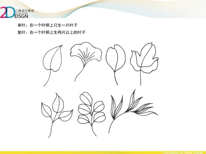 单叶:在一个叶柄上只生一片叶子