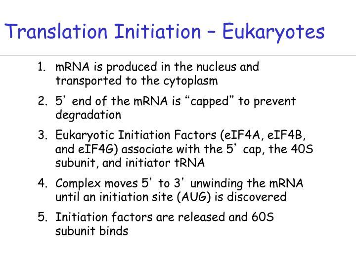 Translation Initiation – Eukaryotes