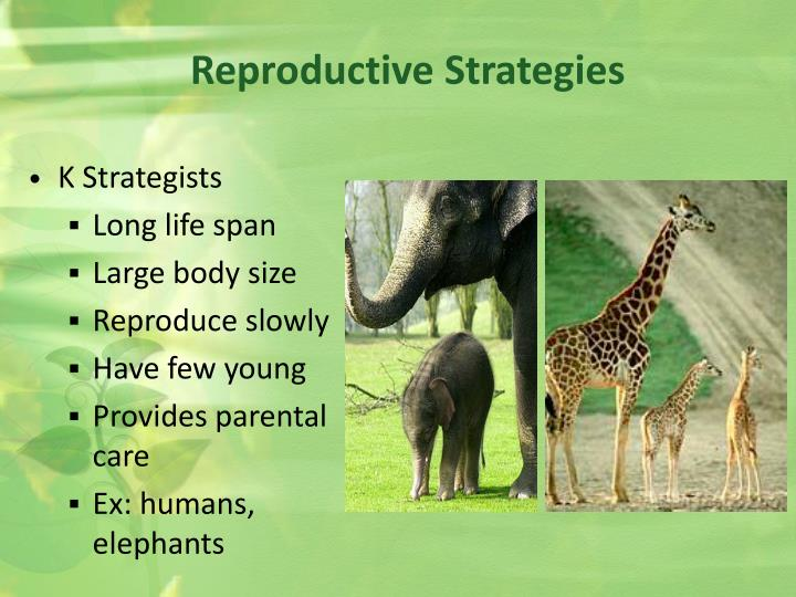 Reproductive Strategies