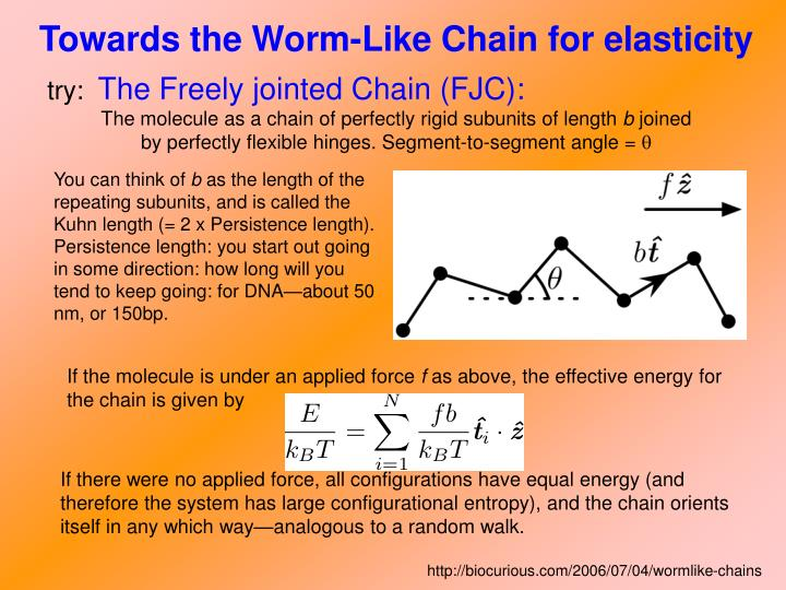 Towards the Worm-Like Chain for elasticity