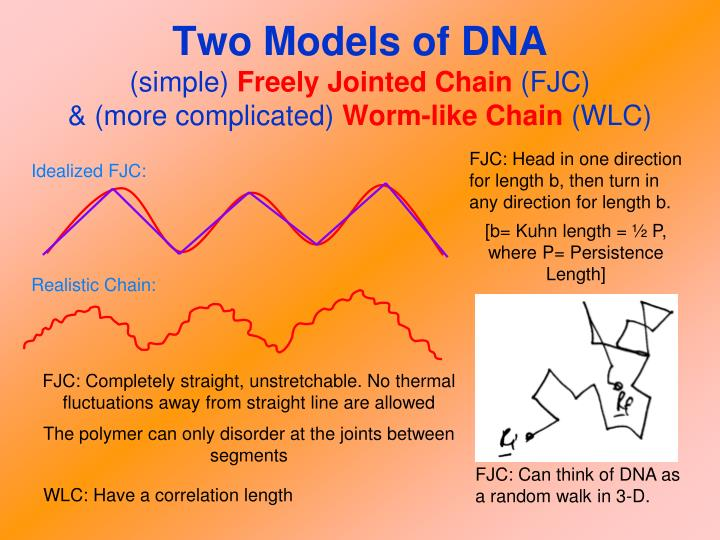 Two Models of DNA