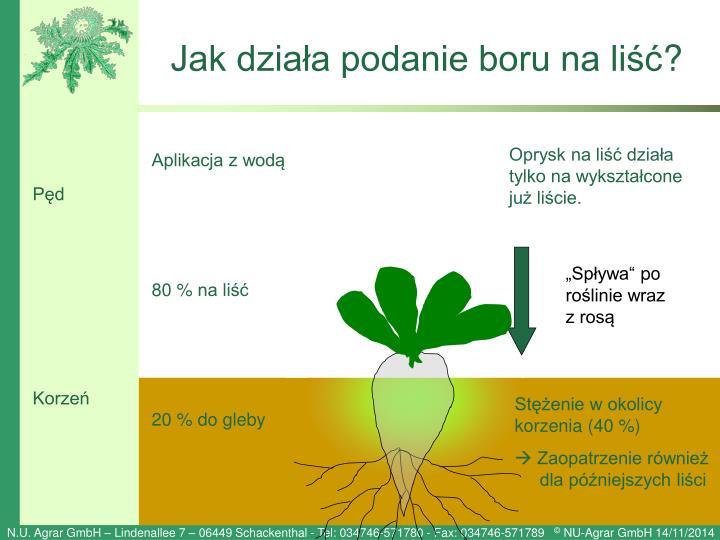 Jak działa podanie boru na liść