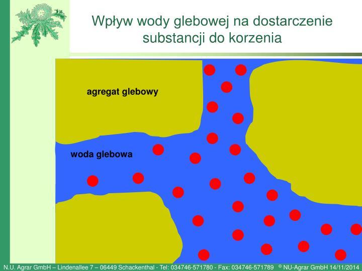 Wpływ wody glebowej na dostarczenie substancji do korzenia