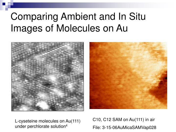 Comparing Ambient and In Situ Images of Molecules on Au