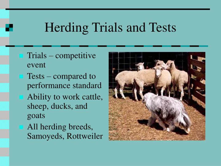 Herding Trials and Tests