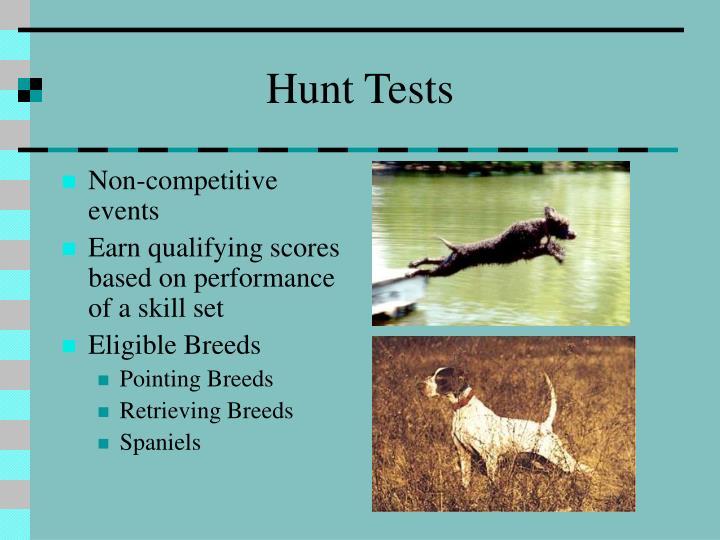 Hunt Tests