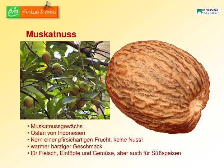 Muskatnuss