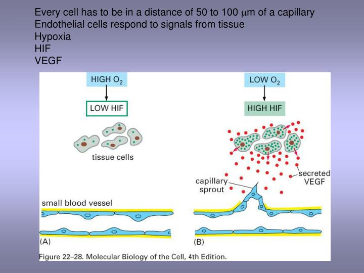 Every cell has to be in a distance of 50 to 100