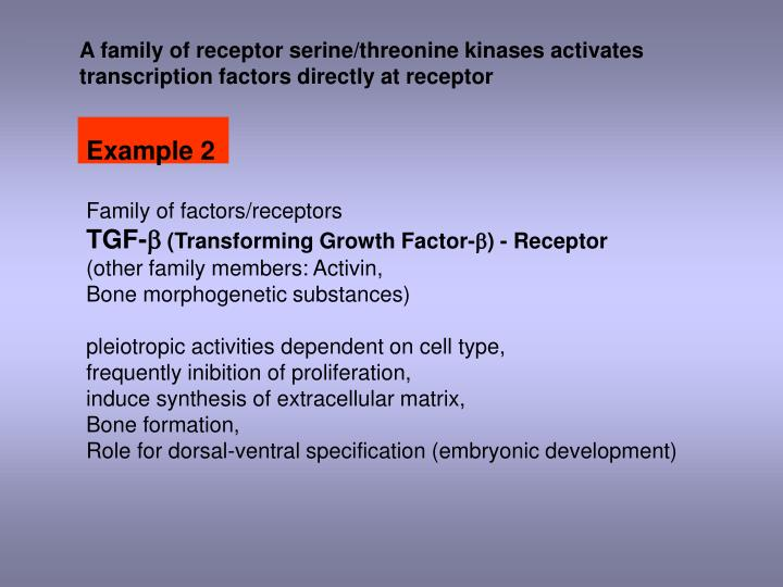 A family of receptor serine/threonine kinases activates