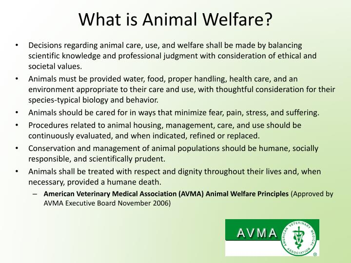 What is animal welfare1