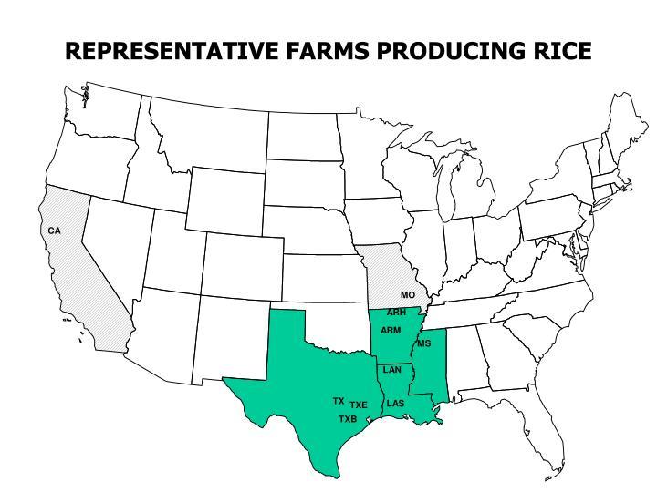 REPRESENTATIVE FARMS PRODUCING RICE