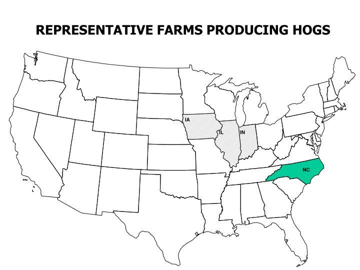 REPRESENTATIVE FARMS PRODUCING HOGS
