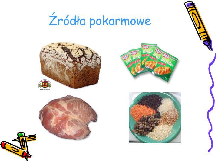 Źródła pokarmowe