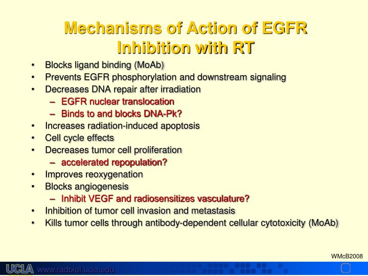 Mechanisms of Action of EGFR Inhibition with RT