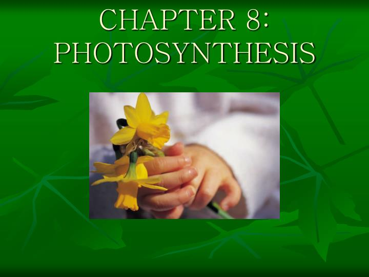 chapter 8 photosynthesis n.