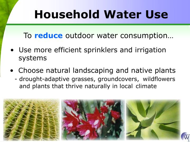 Choose natural landscaping and native plants