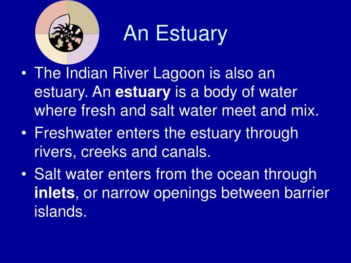 An estuary