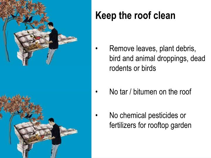 Keep the roof clean