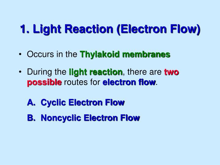 1. Light Reaction (Electron Flow)