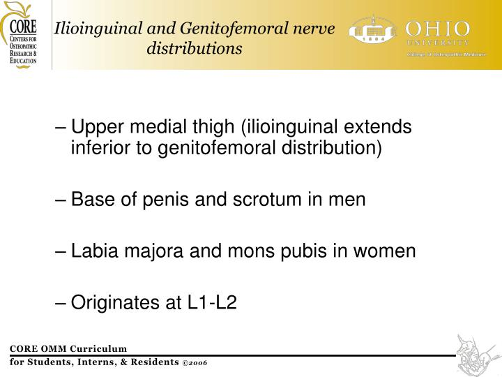 Upper medial thigh (ilioinguinal extends inferior to genitofemoral distribution)
