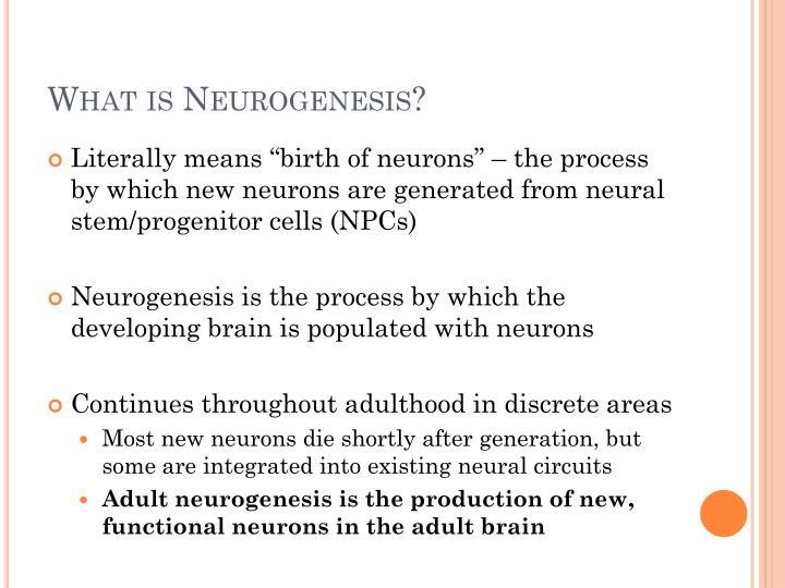 What is neurogenesis