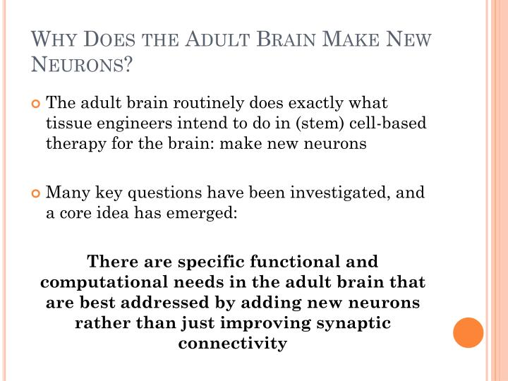 Why Does the Adult Brain Make New Neurons?