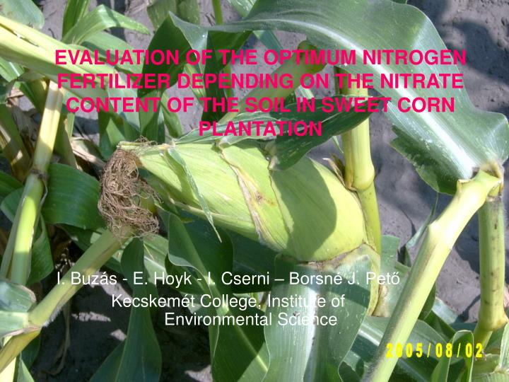 EVALUATION OF THE OPTIMUM NITROGEN FERTILIZER DEPENDING ON THE NITRATE CONTENT OF THE SOIL IN SWEET ...