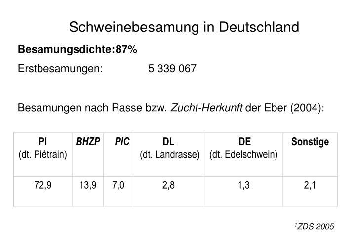 Schweinebesamung in Deutschland