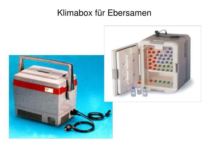 Klimabox für Ebersamen
