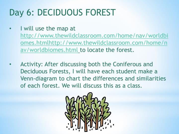Day 6: DECIDUOUS FOREST