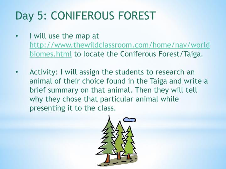 Day 5: CONIFEROUS FOREST