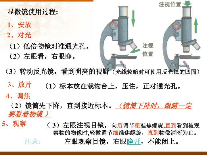 显微镜使用过程