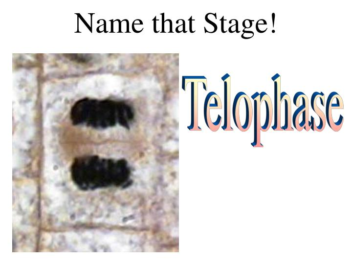 Name that Stage!