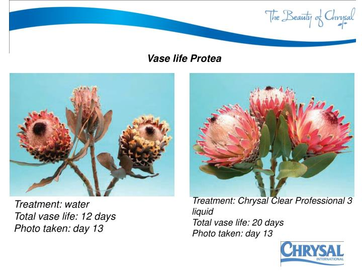 Vase life