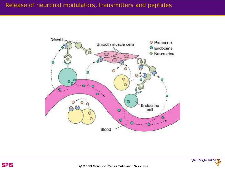 Release of neuronal modulators, transmitters and peptides