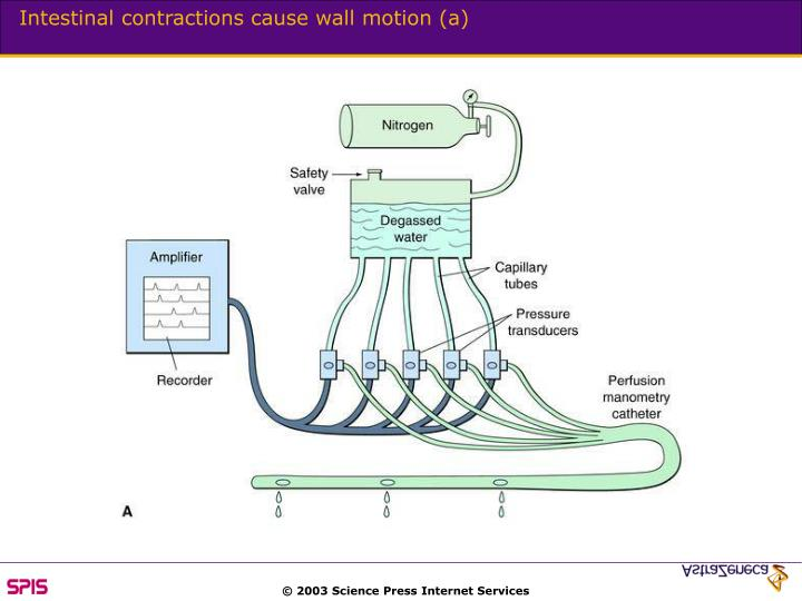 Intestinal contractions cause wall motion (a)