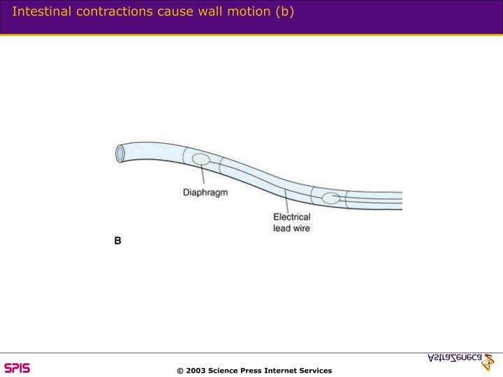 Intestinal contractions cause wall motion (b)