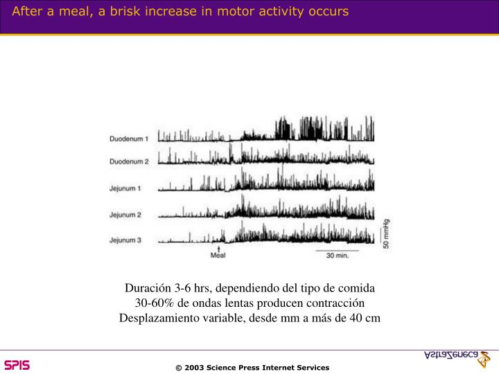 After a meal, a brisk increase in motor activity occurs